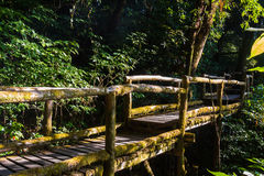 Ang Ka Nature Trail på den Doi Inthanon nationalparken Royaltyfri Bild