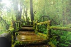 Ang Ka nature trail Stock Images