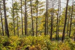 ANG Khang Doi δέντρων πεύκων Στοκ εικόνες με δικαίωμα ελεύθερης χρήσης