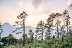 ANG Khang Doi δέντρων πεύκων Στοκ εικόνα με δικαίωμα ελεύθερης χρήσης