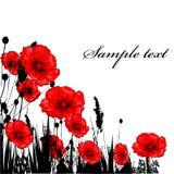 ANG rode poppie van het gras Stock Fotografie