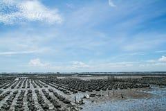 ANG Sila, Ταϊλάνδη αγροτικής απαγόρευσης στρειδιών Στοκ Εικόνες