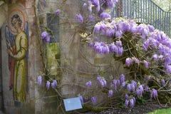 Ange de mosaïque et glycine, abbaye de Mottisfont, Hampshire, Angleterre Photo stock