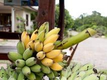 Angebaute Banane Lizenzfreie Stockbilder