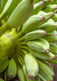 Angebaute Banane, Bündel grüne Bananen. Stockfotos
