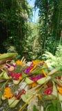Angebote Balinese stockfotografie
