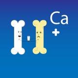 Angebotohne Kalzium zu entbeinende milch des gesunden Knochens Stockbilder