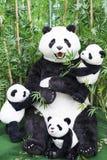 Angefüllte Panda-Bildschirmanzeige Stockbilder