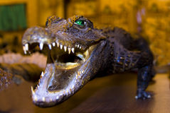 Angefülltes Krokodil mit geöffneten Kiefern Lizenzfreies Stockfoto