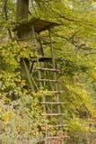 Angehobenes Fell - angehobene Vorhänge im Herbst beleuchten Stockfotos
