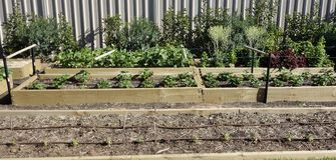 Angehobenes Garten-Bett des Gemüses. Lizenzfreie Stockbilder