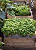 Angehobenes Gartenbett Stockfoto