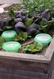 Angehobenes Gartenbett mit Gemüse Stockbild