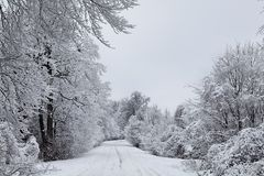 Angekleidet bis zum Winter 2 Lizenzfreie Stockfotografie