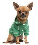 Angekleidet Misch-züchten Sie den Hund und sitzen stockbilder