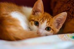 Angelägen blick av en katt Arkivfoto