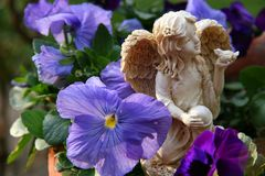 Angel Amidst the Pansies. Angel Statuary in Pot of Pansies Stock Photos