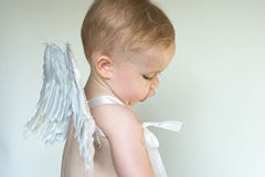 Angel Boy. Image of an adorable toddler wearing angel wings Royalty Free Stock Images