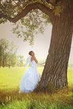 Angel bride with tree Stock Photos