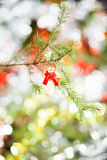 Angel Christmas Tree Decoration Royalty Free Stock Image