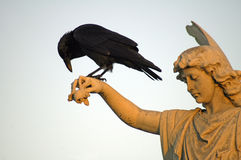 Angel and crow Royalty Free Stock Images