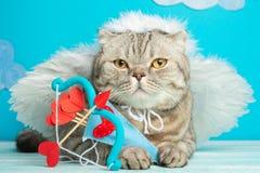Angel Cupid Scottish-kat met pijlen van liefde, leuke pot stock fotografie
