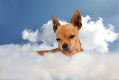 Angel dog Royalty Free Stock Images