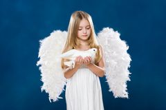 Angel with dove stock images