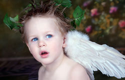 Angel Eyes. Boy with wings, blue eyes, and ivy halo royalty free stock photography