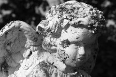 Angel face. Statue graveyard wings moss dusk Royalty Free Stock Photos
