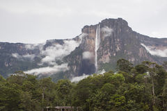Angel Falls in Venezuela. Waterfall pouring down a cliff, Angel Falls, Venezuela Royalty Free Stock Photos