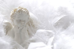 Angel in feathers. White angel in soft feathers Royalty Free Stock Photo