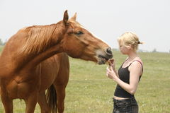 Angel feeding horse royalty free stock photography