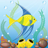 Angel fish. An angle fish swimming in the sea , and a coral around her Stock Photography