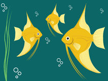 Angel fish Stock Images