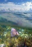 Angel fish scene Stock Image
