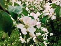 Angel Garden arkivfoto