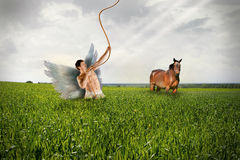 Angel and Horse on Grassfield. Angel is Taking a Rope from Heaven and Horse is Looking at Him Royalty Free Stock Photos