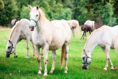 Angel horses undrer rain Royalty Free Stock Image