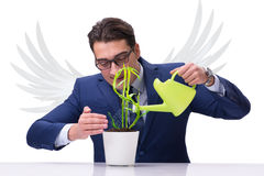 The angel investor growing future profits isolated on white Stock Images