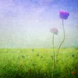 Meadow flowers background Stock Photo