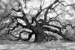 Angel Oak Royalty Free Stock Photography