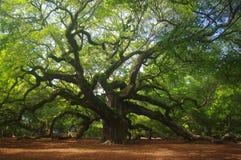 Angel Oak Royalty-vrije Stock Afbeeldingen