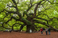 Angel Oak Lizenzfreies Stockfoto
