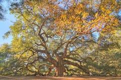 Angel Oak Lizenzfreies Stockfoto