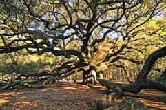 Angel Oak Stockbild