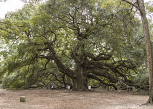The angel oak near Charleston, South Carolina Stock Photo