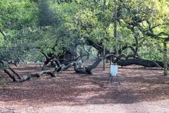 Angel Oak Tree a Charleston, Sc fotografie stock libere da diritti