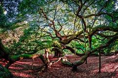 Free Angel Oak Tree On John`s Island South Carolina Stock Image - 83178791