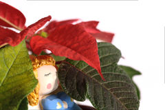 Angel sleeping under the Christmas rose Royalty Free Stock Image